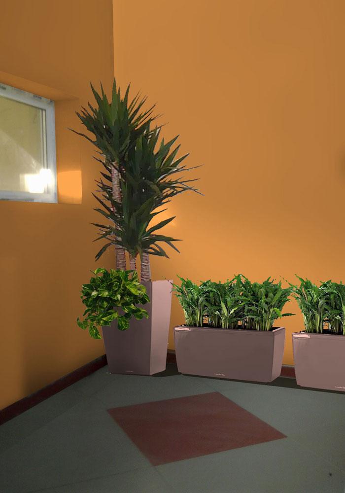 АСФ Енерджи. Частен обект - интериорно озеленяване