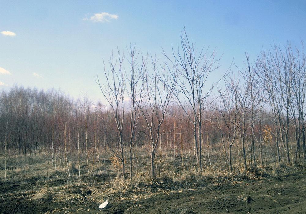 """""""Стомана"""" - изграждане на шумозаглушителна зона - широколистни"""