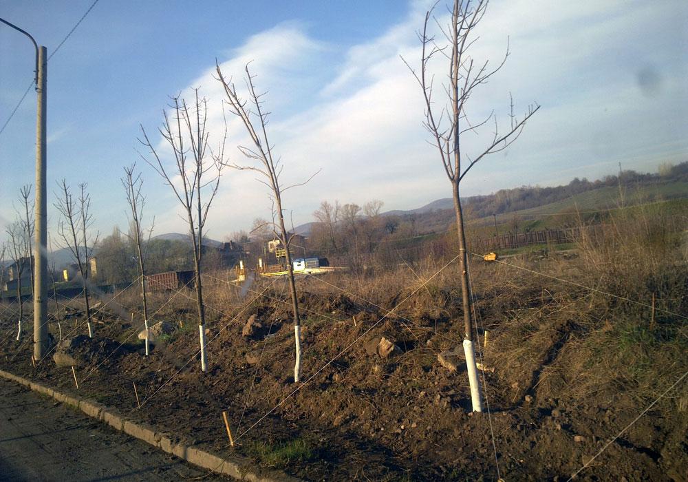 """Завод """"Стомана"""". Изграждане на шумозаглушителна зона - широколистни"""